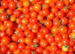 photo of super 100 tomatoes