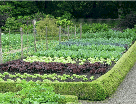 Adventures in the Vegetable Garden- Tips and Tricks for Spring Planting!  Part 2